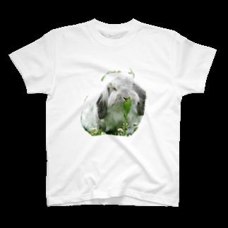 d's rabbitの大福1 T-shirts