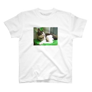ハチワレ猫 ムン T-shirts