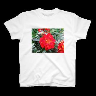 Dreamscapeの情熱はすぐそこに!! T-shirts