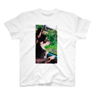 凛としたイヌ T-shirts