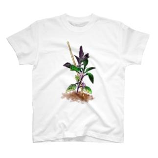 なす T-shirts
