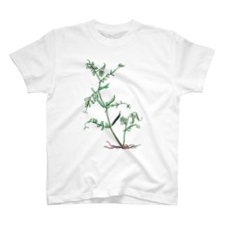 カラスノエンドウ T-shirts