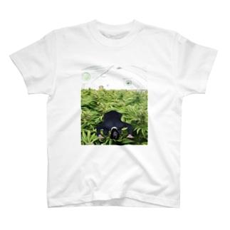 野菜畑で土下座 T-shirts