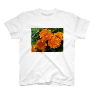 明るく爽やかに!! T-shirts