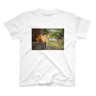 夕涼み猫 ~黄昏~ T-shirts