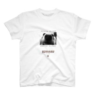 小春(犬) T-shirts