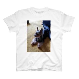 うちのポポ T-shirts