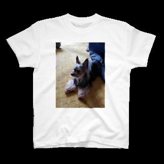 ネコ丸吉(タマ(*´ω`))のうちのポポ T-shirts