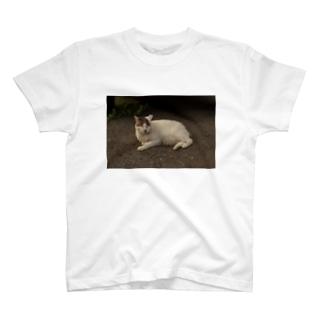 にゃんこにやんこ T-shirts