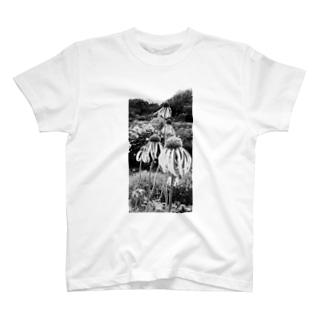 背比べ T-shirts