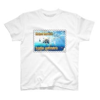 テングダイ★白地の製品だけご利用ください!! Striped boarfish★Recommend for white base products only !!  T-shirts