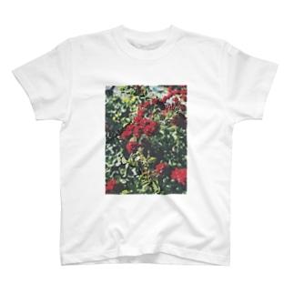 🦈の薔薇 02 T-Shirt