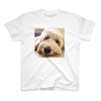 ラブラドゥードル T-shirts