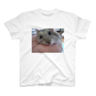 見つめるハム T-shirts