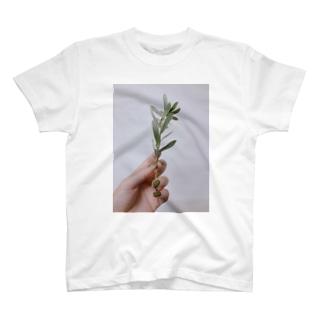 imoのgreen T-shirts