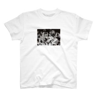 華々しい T-shirts
