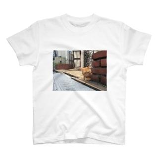 SENchan T-shirts