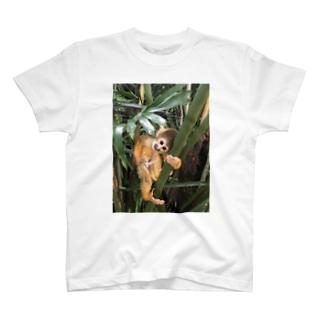 listesar  T-shirts