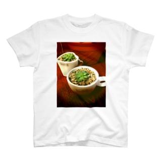 多肉植物♡マクドガリー T-shirts