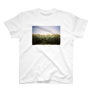 ひまわり T-shirts