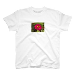 ぽぴぃ T-shirts