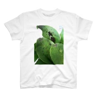黒い幼虫 T-shirts