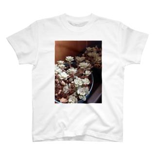 多肉植物♡ケープブランコ T-shirts
