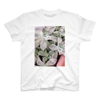 多肉植物♡朧月 T-shirts