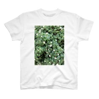 多肉植物♡ブロウメアナ T-shirts