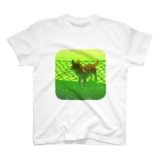 9.29  光犬陰 T-shirts