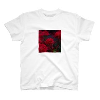 Red Spyder Lily shirt T-shirts