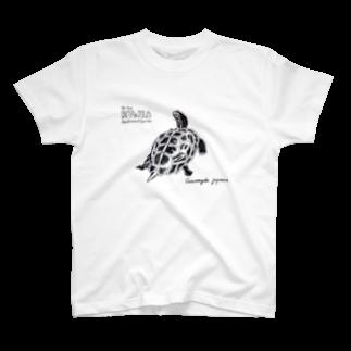 IkimonoBoyの日本の爬虫類 リュウキュウヤマガメ T-shirts