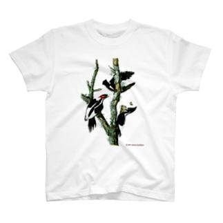 アメリカハシジロキツツキ T-shirts