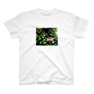 1年放置されたあじさい T-shirts