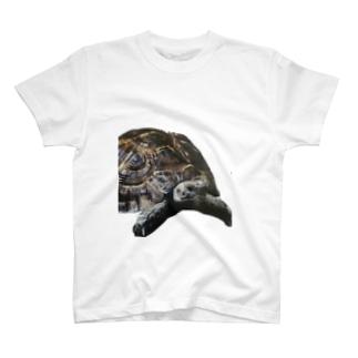 アラブギリシャリクガメ T-shirts