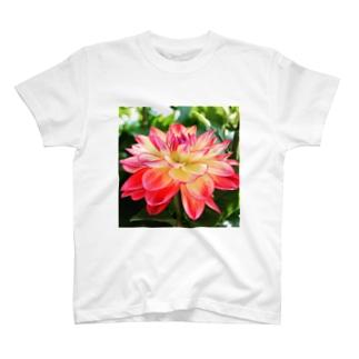バイカラーダリアをおともに。 T-shirts