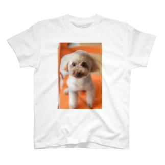 ドラミTシャツ T-shirts