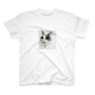 peroCAT T-shirts