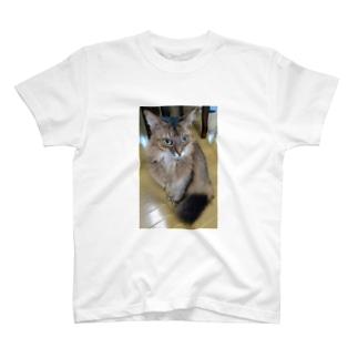 ソマリ T-shirts