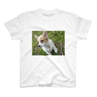 コーギー(メルト)グッズ T-shirts