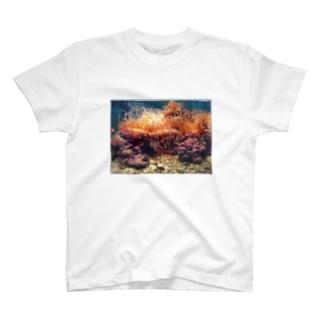 SANGOSHO T-shirts