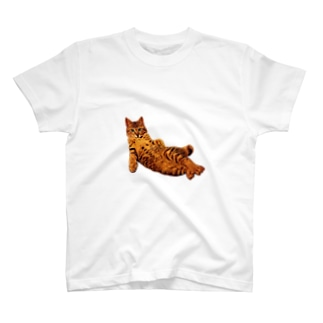 Elegant Cat T-shirts