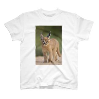 カラカルTシャツ② T-shirts