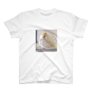 オカメインコのムーン羽繕い中 T-shirts