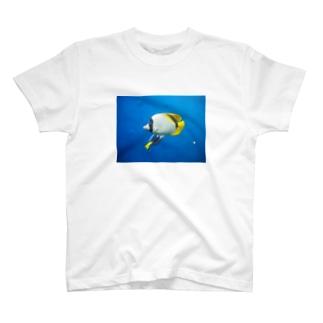 アクアマリン 魚 T-shirts