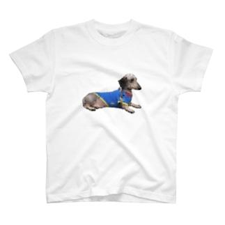 ぴょるくん T-shirts