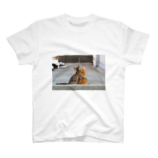 猫写真家 森永健一 Feel So High shopのずっと一緒 T-shirts