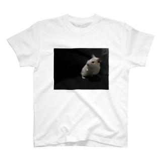 キンクマハムスターのてんちゃん T-shirts