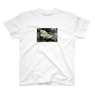 ミドリニシキヘビ T-shirts