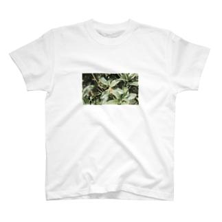 金木犀の朝 T-shirts